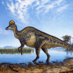 Corythosaurus Facts