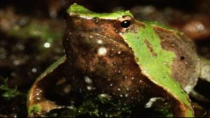 Some frogs vomit by throwing up their entire stomach and then wiping it off with its forearms
