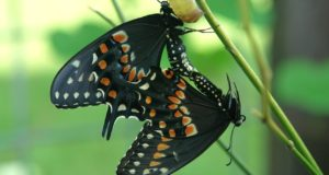 Facts about Butterflies & Moths – How to Tell the Difference