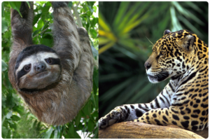 Animals of the Rainforest Facts