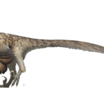 Deinonychus Facts