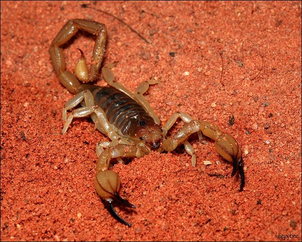 scorpion Top 10 Unknown Animal Facts