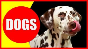 35 Fun Facts About Dogs