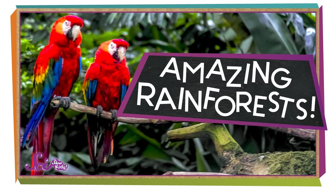Interesting Facts about the Rainforests | Science Facts