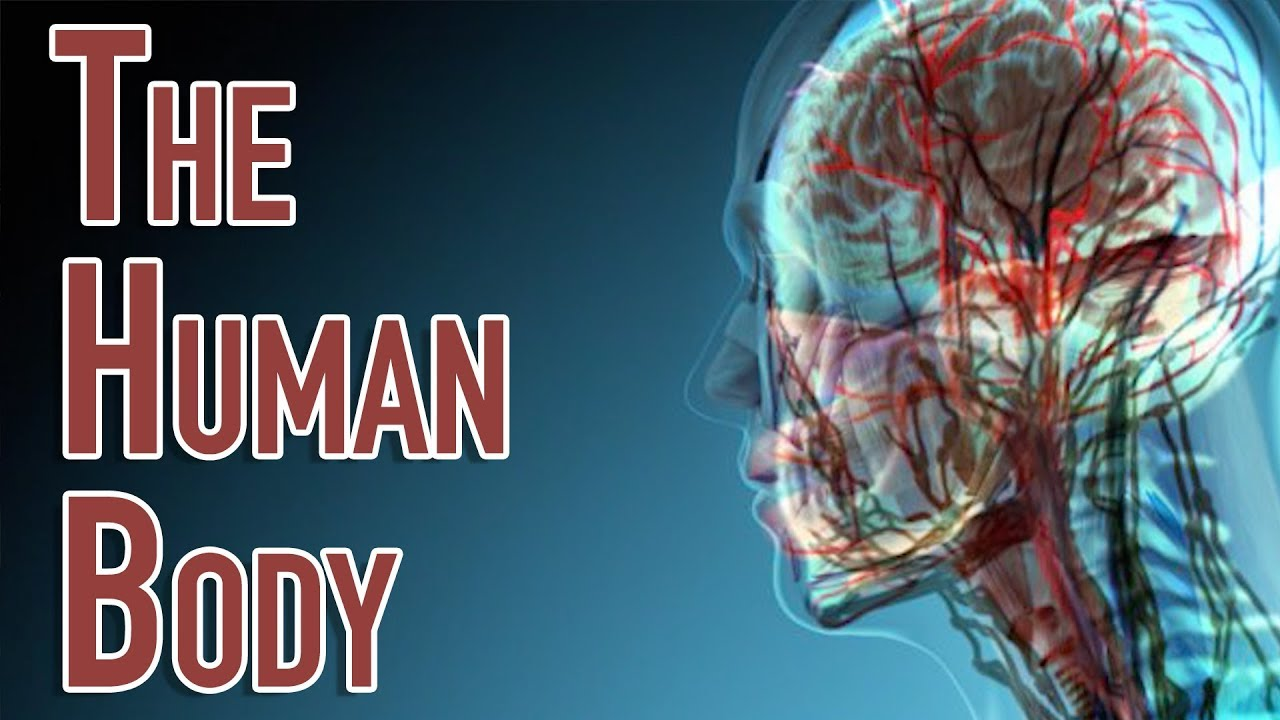 human body system systems parts important why science facts