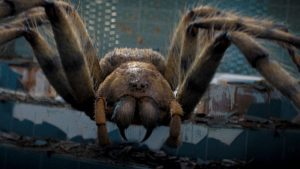 The facts about spiders and their types