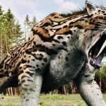 Saber-Toothed Tiger of North America