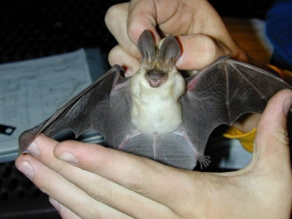 https://www.scifacts.net/wp-content/uploads/2020/12/holding-bat-closeup.jpg