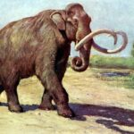 Facts about Mammoths, A Brief History