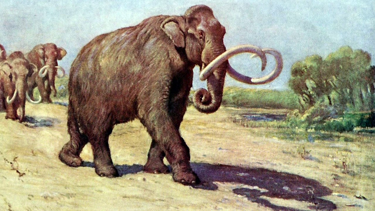facts about mammoth