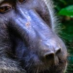 Facts about Baboons