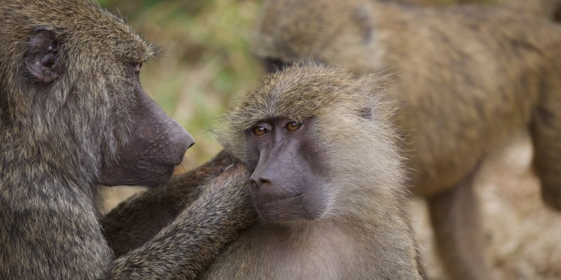 photo of mom and baby baboon